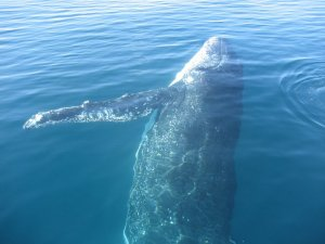 A singing whale.
