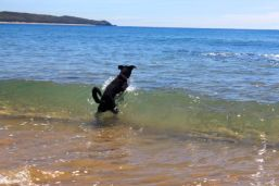 Catching a wave at Agnes Water