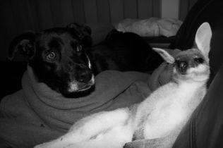 Dodge and Maverick 'getting along'