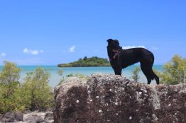 Dodge in Airlie Beach