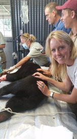 Maly the sun bear's operation with the Taronga Zoo crew.
