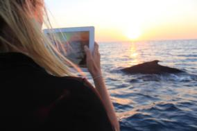Whale season in Hervey Bay, whale watch capital of the world.