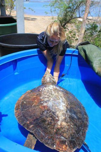 Amanda, my turtle doppleganger.