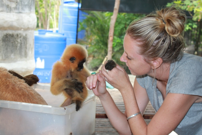 Golden Cheeked Gibbon- confiscated pet.