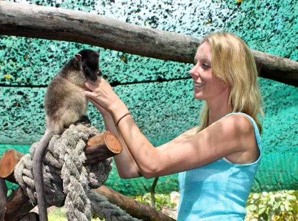 A baby Lumholtz Tree Kangaroo.