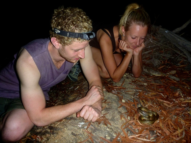 Taking a closer look at wild snakes in Cape York.