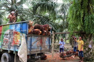 A village that survives off palm oil and palm oil alone